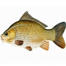 GoldFish Per 100 gram