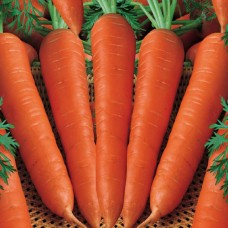 Carrots Import Per 100 gram